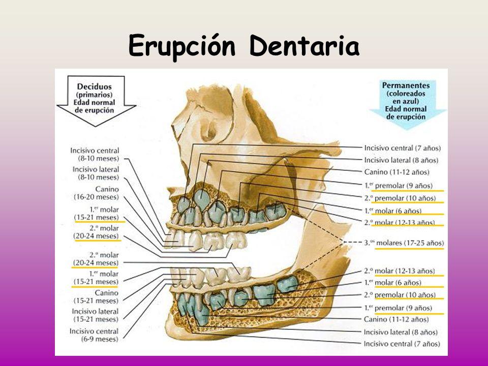 Erupción Dentaria