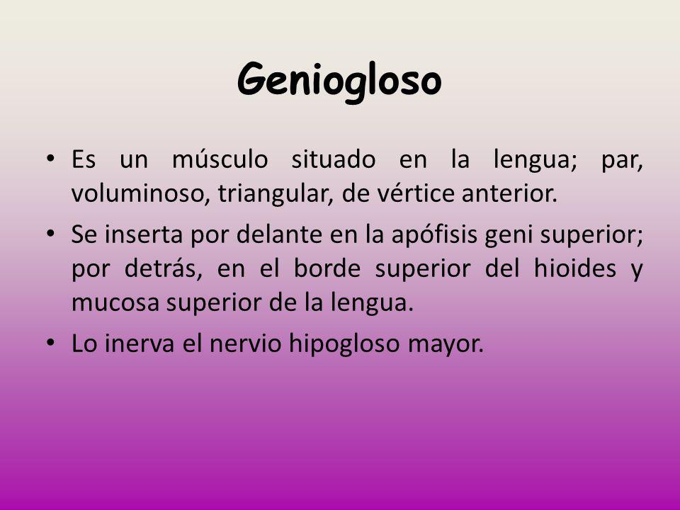 GenioglosoEs un músculo situado en la lengua; par, voluminoso, triangular, de vértice anterior.
