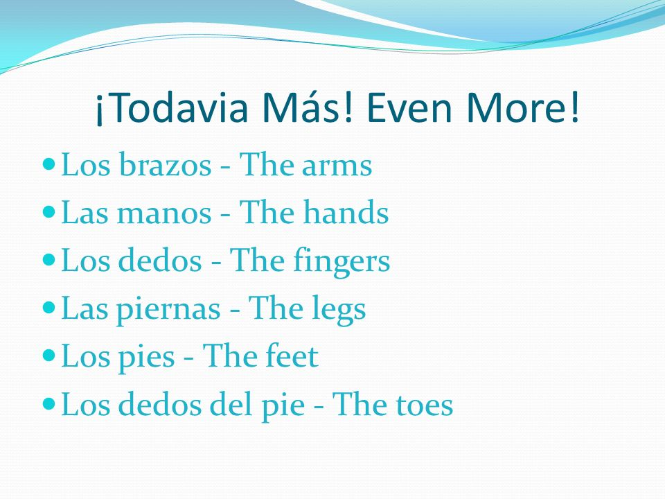 ¡Todavia Más! Even More! Los brazos - The arms Las manos - The hands