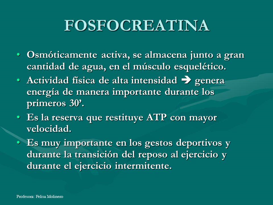 FOSFOCREATINA Osmóticamente activa, se almacena junto a gran cantidad de agua, en el músculo esquelético.