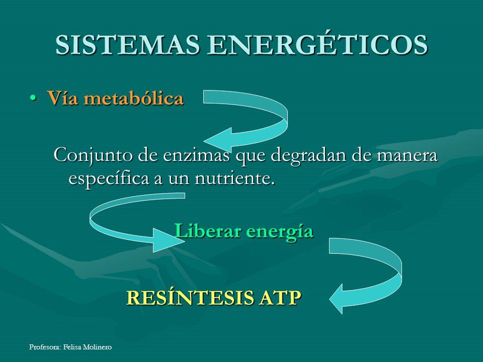 SISTEMAS ENERGÉTICOS Vía metabólica