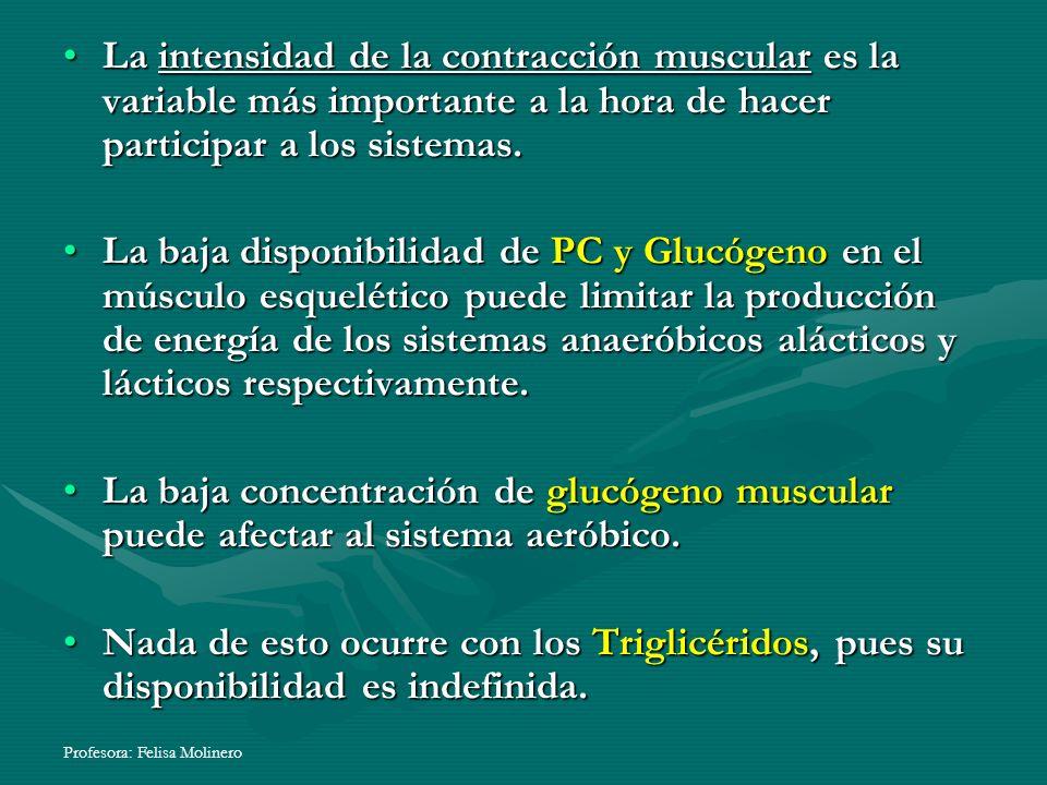 La intensidad de la contracción muscular es la variable más importante a la hora de hacer participar a los sistemas.