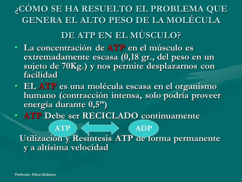 ATP Debe ser RECICLADO continuamente