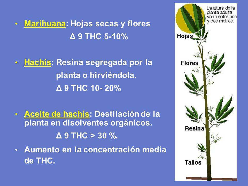 Marihuana: Hojas secas y flores