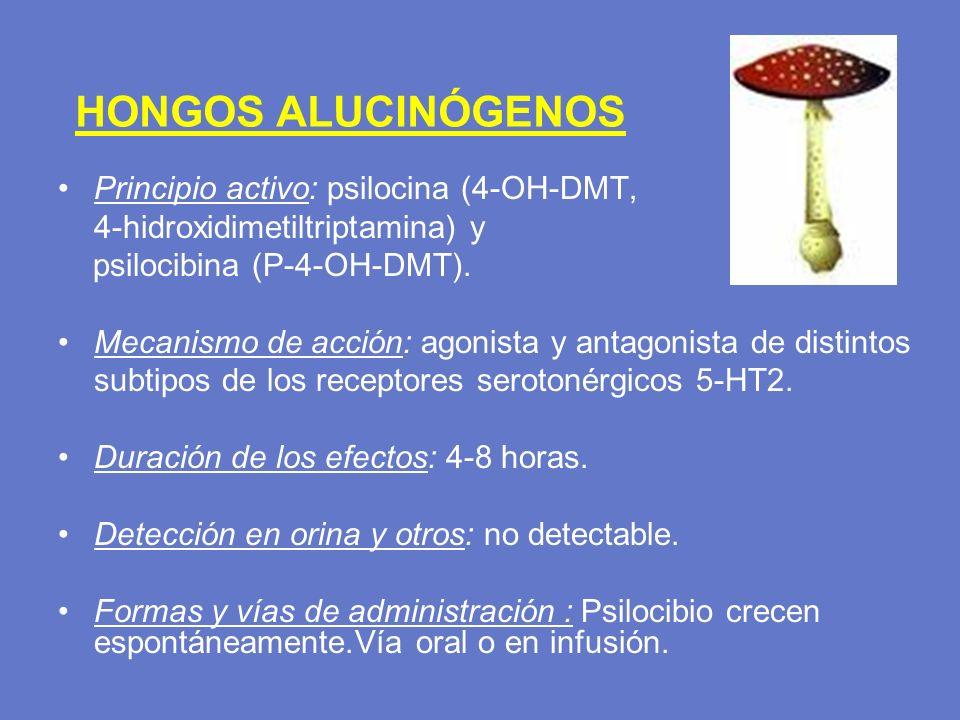 HONGOS ALUCINÓGENOS Principio activo: psilocina (4-OH-DMT,