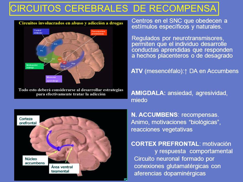 CIRCUITOS CEREBRALES DE RECOMPENSA