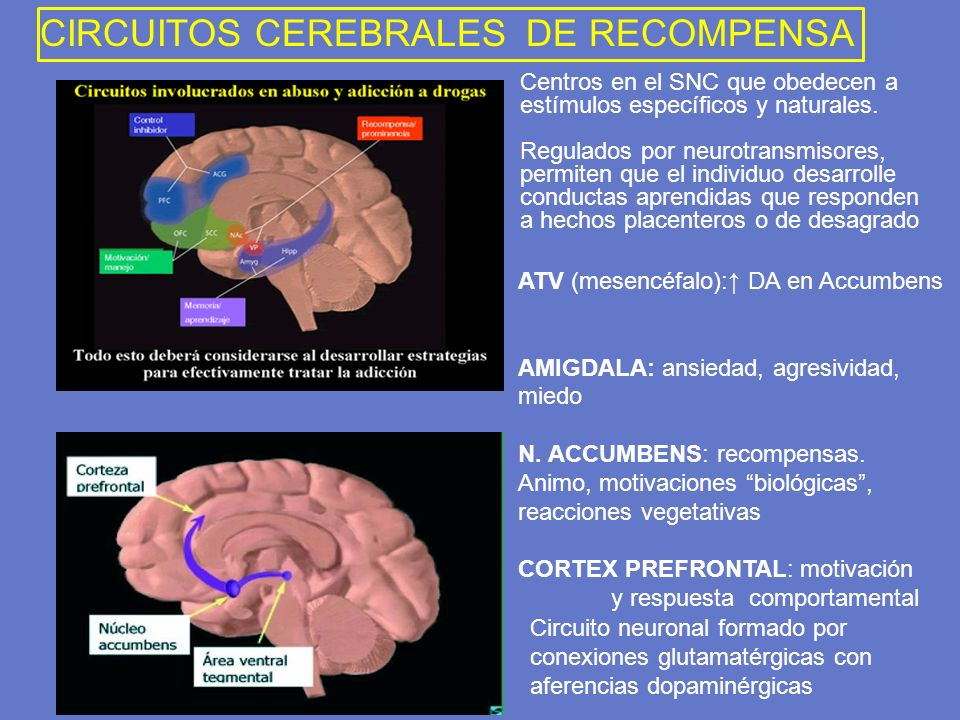 Circuito Neuronal : Trastornos por uso de sustancias ppt descargar