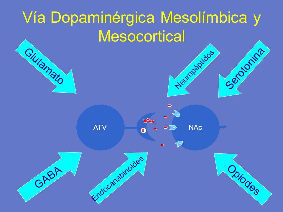 Vía Dopaminérgica Mesolímbica y Mesocortical