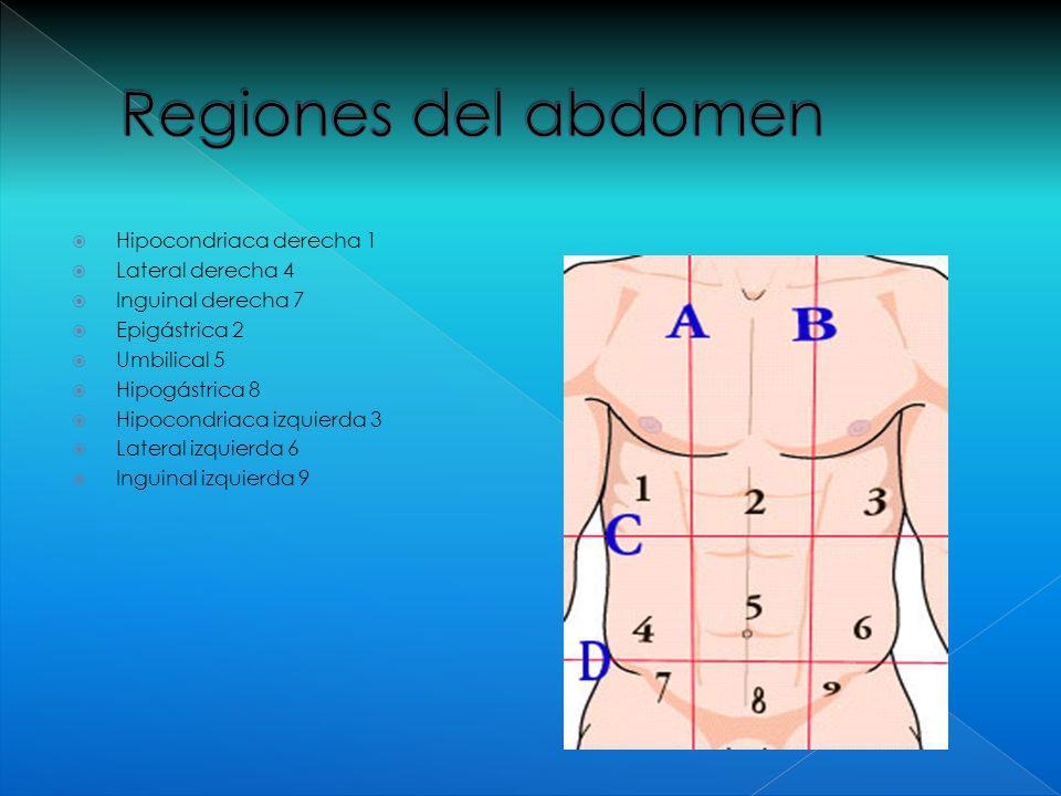 Abdomen. - ppt video online descargar
