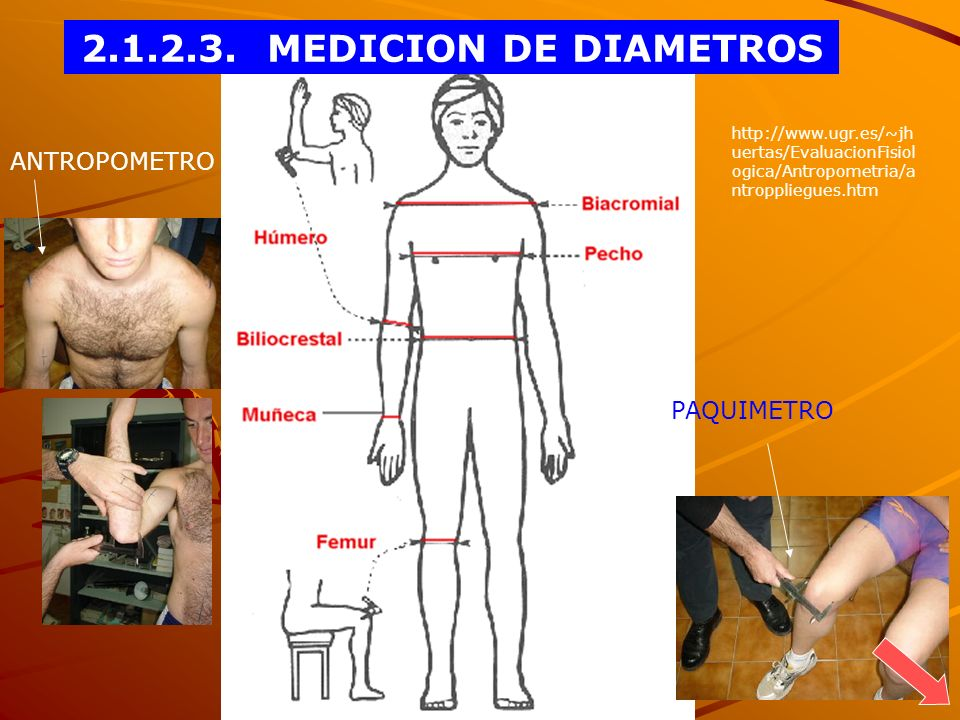 2.1.2.3. MEDICION DE DIAMETROS ANTROPOMETRO PAQUIMETRO