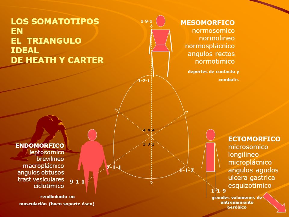 LOS SOMATOTIPOS EN EL TRIANGULO IDEAL DE HEATH Y CARTER