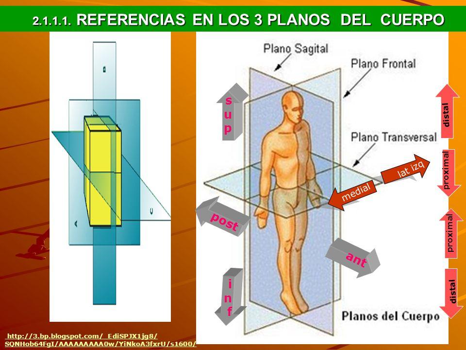 2.1.1.1. REFERENCIAS EN LOS 3 PLANOS DEL CUERPO