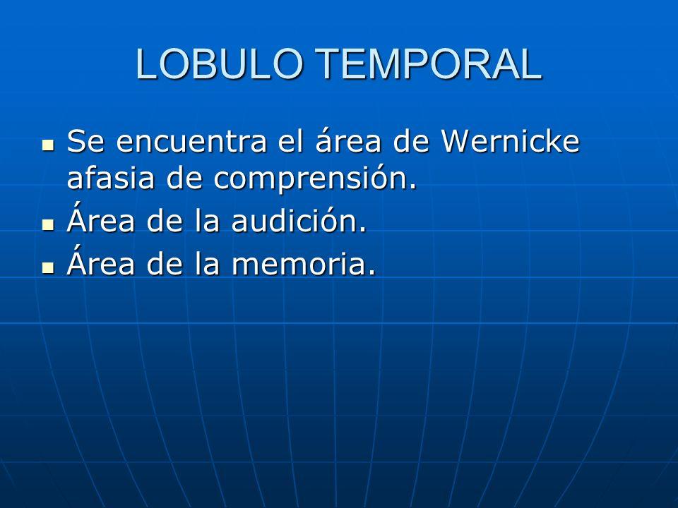 LOBULO TEMPORALSe encuentra el área de Wernicke afasia de comprensión.