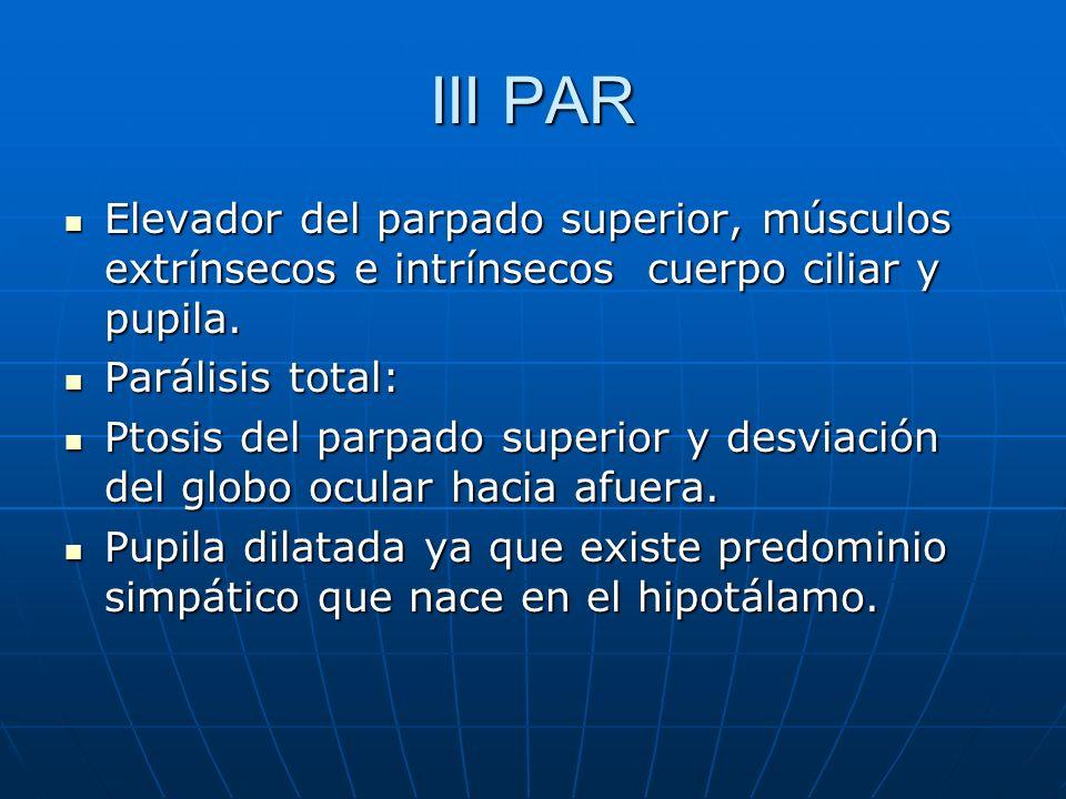 III PARElevador del parpado superior, músculos extrínsecos e intrínsecos cuerpo ciliar y pupila. Parálisis total: