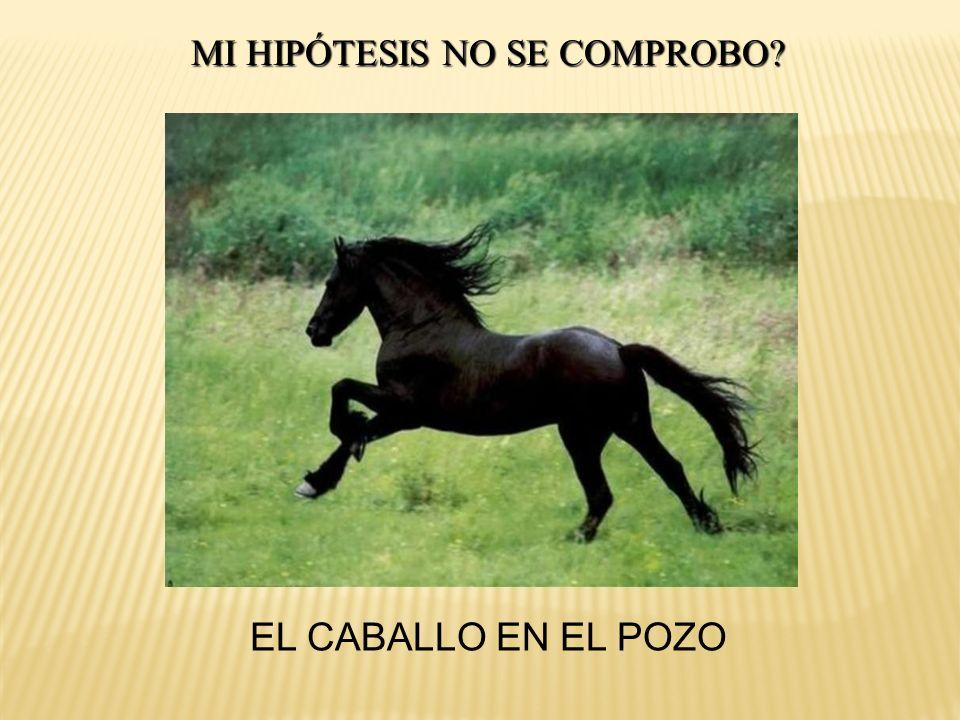 MI HIPÓTESIS NO SE COMPROBO