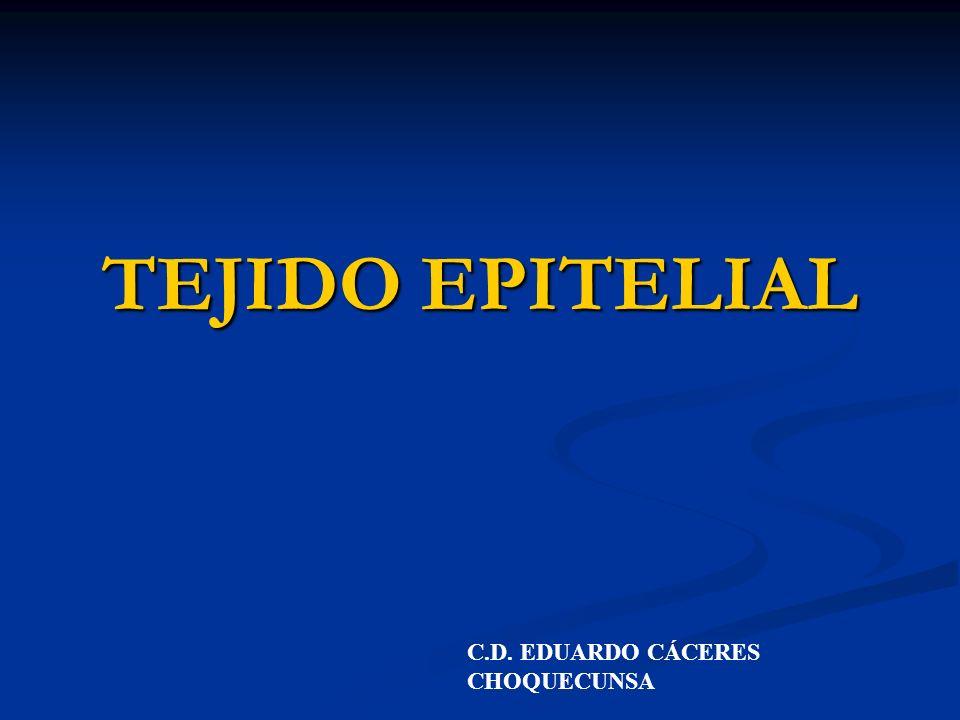 TEJIDO EPITELIAL C.D. EDUARDO CÁCERES CHOQUECUNSA