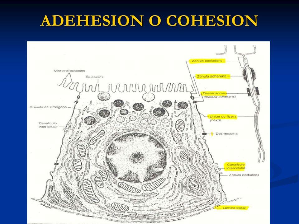 ADEHESION O COHESION