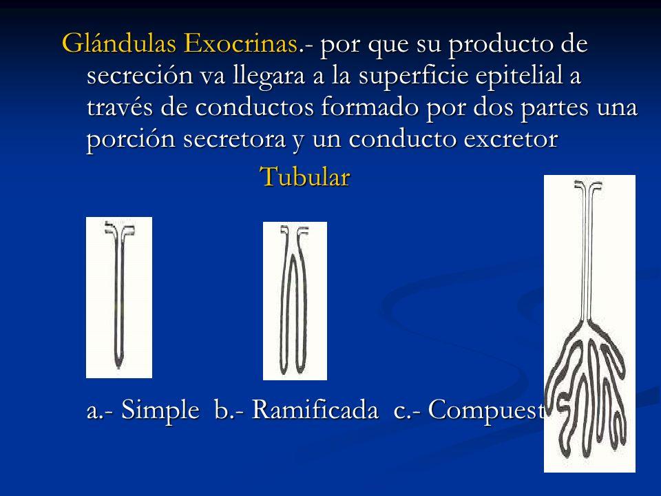 Glándulas Exocrinas.- por que su producto de secreción va llegara a la superficie epitelial a través de conductos formado por dos partes una porción secretora y un conducto excretor