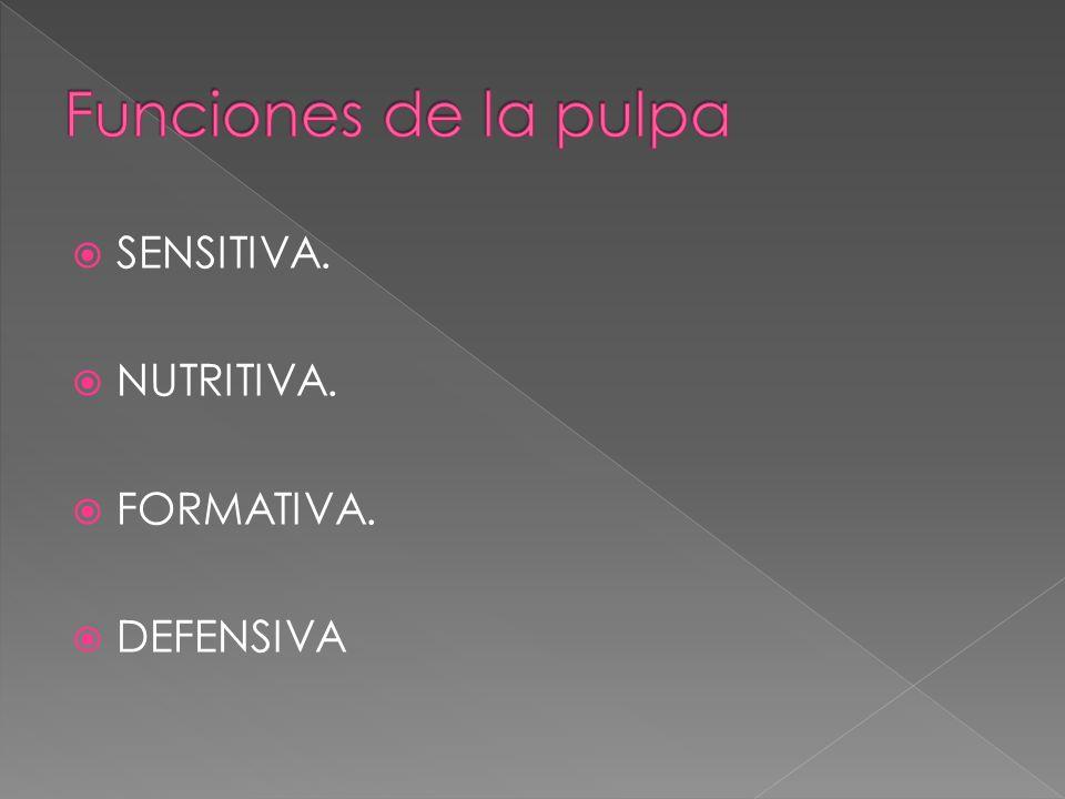 Funciones de la pulpa SENSITIVA. NUTRITIVA. FORMATIVA. DEFENSIVA