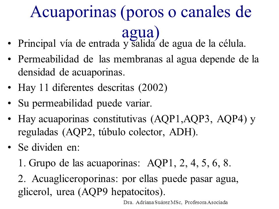 Acuaporinas (poros o canales de agua)