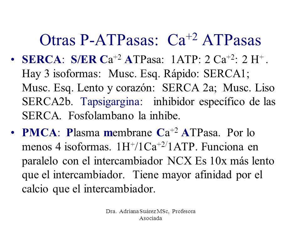 Otras P-ATPasas: Ca+2 ATPasas