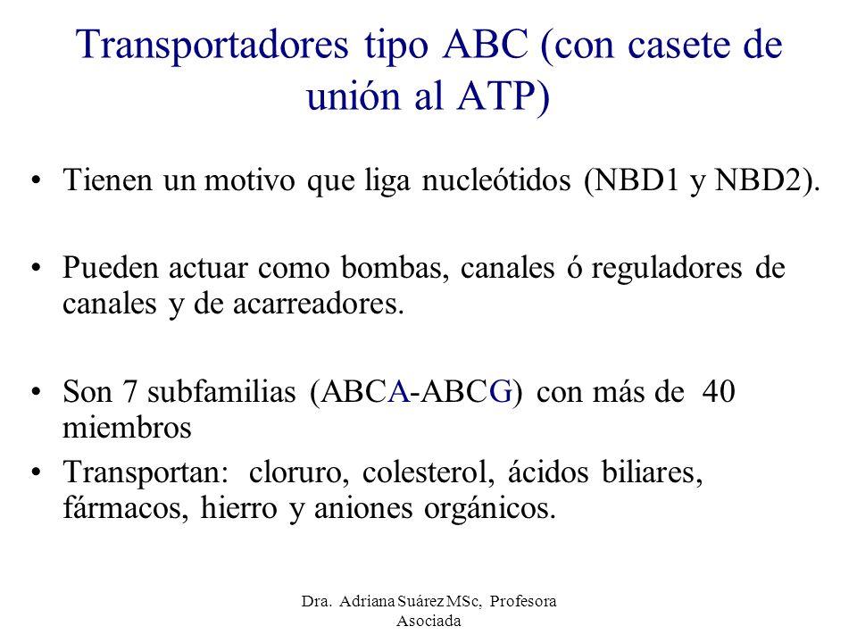 Transportadores tipo ABC (con casete de unión al ATP)