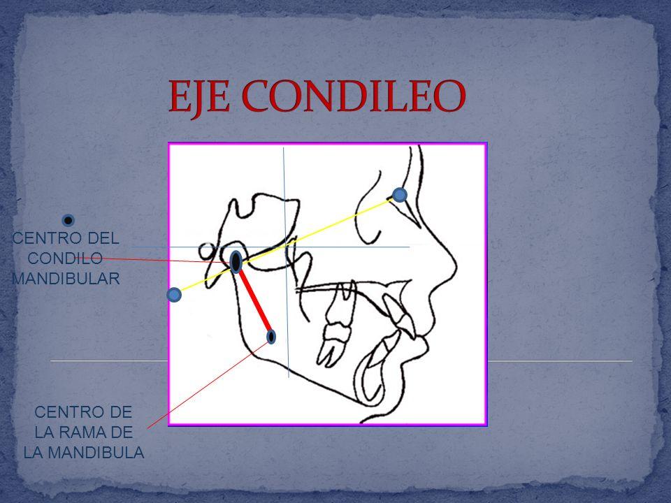 EJE CONDILEO CENTRO DEL CONDILO MANDIBULAR