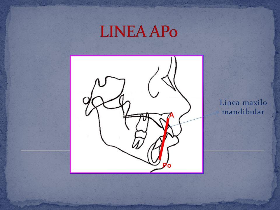 Linea maxilo mandibular