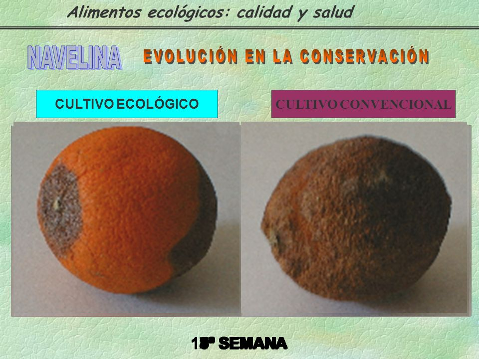 EVOLUCIÓN EN LA CONSERVACIÓN