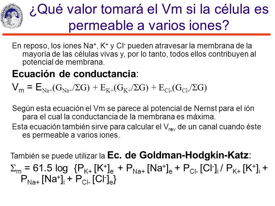 ¿Qué valor tomará el Vm si la célula es permeable a varios iones