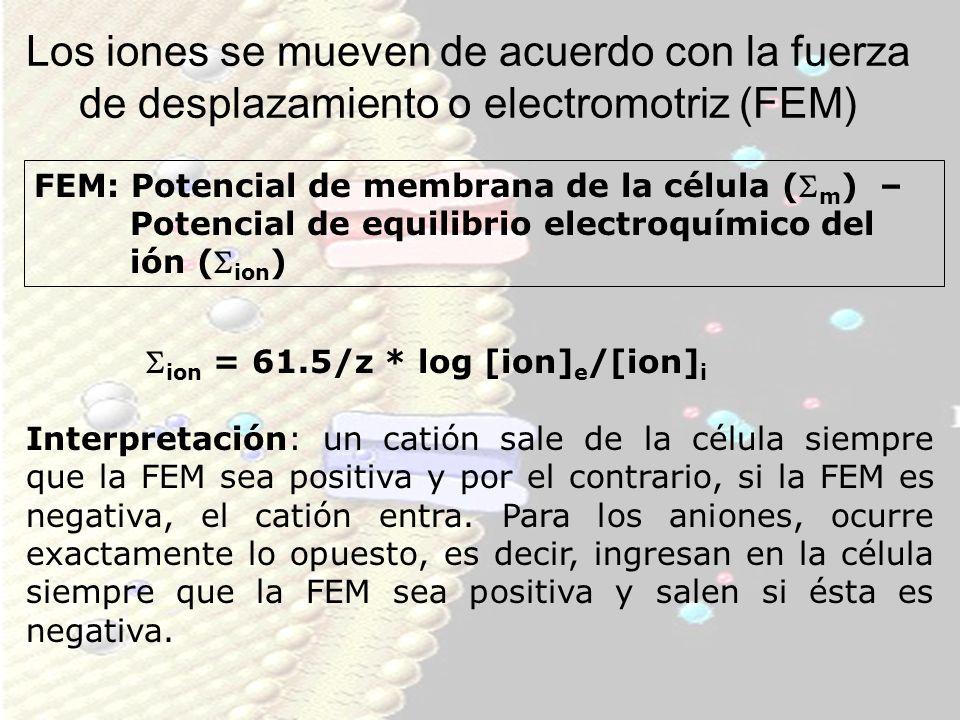 Los iones se mueven de acuerdo con la fuerza de desplazamiento o electromotriz (FEM)