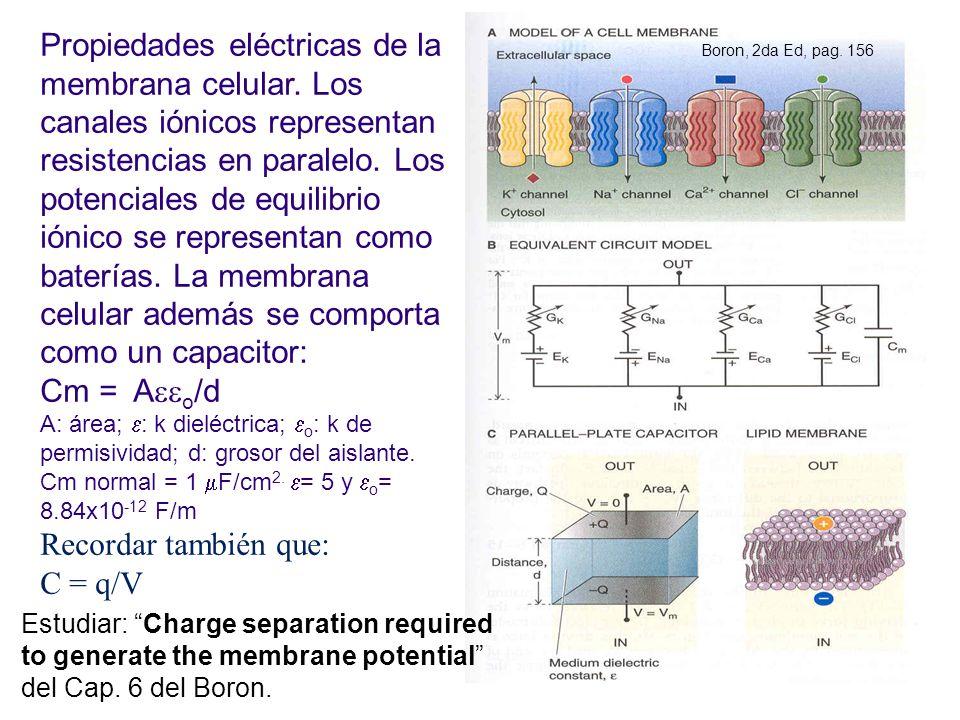 Propiedades eléctricas de la membrana celular