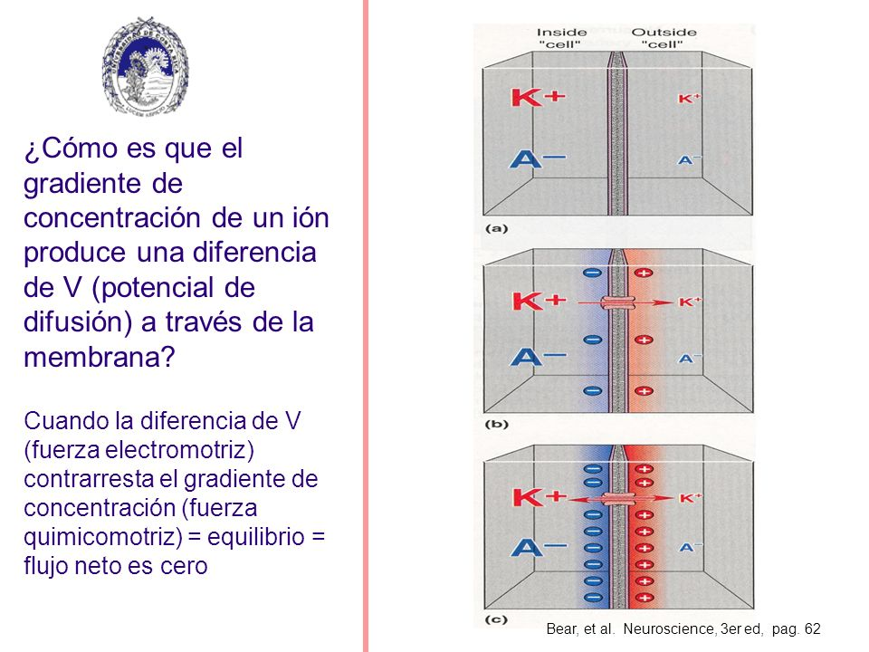 ¿Cómo es que el gradiente de concentración de un ión produce una diferencia de V (potencial de difusión) a través de la membrana
