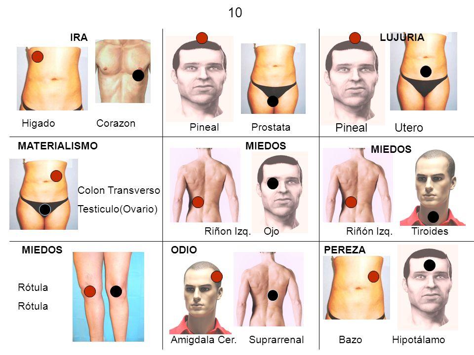 10 Pineal Utero IRA LUJURIA Higado Corazon Pineal Prostata