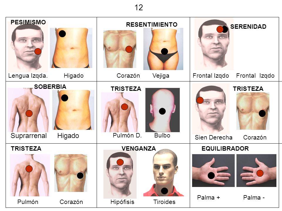 12 Suprarrenal Higado PESIMISMO RESENTIMIENTO SERENIDAD