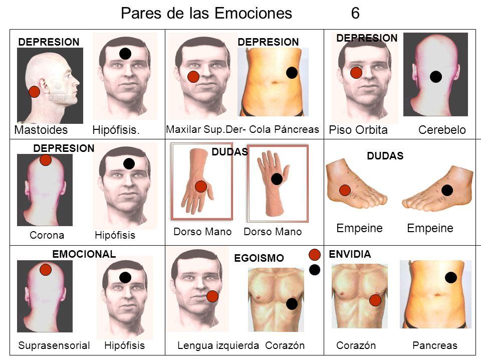 Pares de las Emociones 6 Mastoides Hipófisis. Piso Orbita Cerebelo