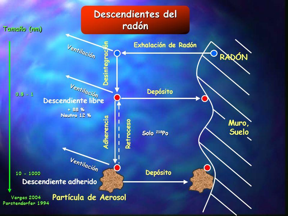 Descendientes del radón Descendiente adherido