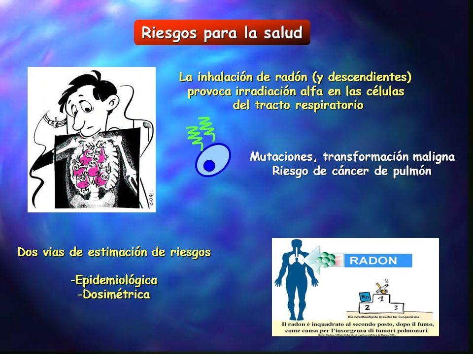 Riesgos para la salud La inhalación de radón (y descendientes)