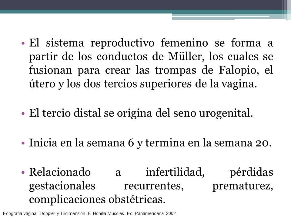 El tercio distal se origina del seno urogenital.
