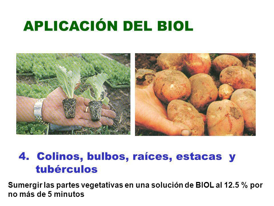 APLICACIÓN DEL BIOL 4. Colinos, bulbos, raíces, estacas y tubérculos