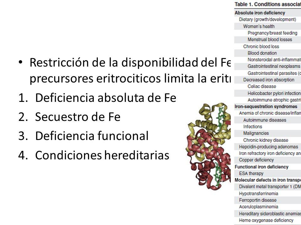 Restricción de la disponibilidad del Fe a los precursores eritrociticos limita la eritropoyesis