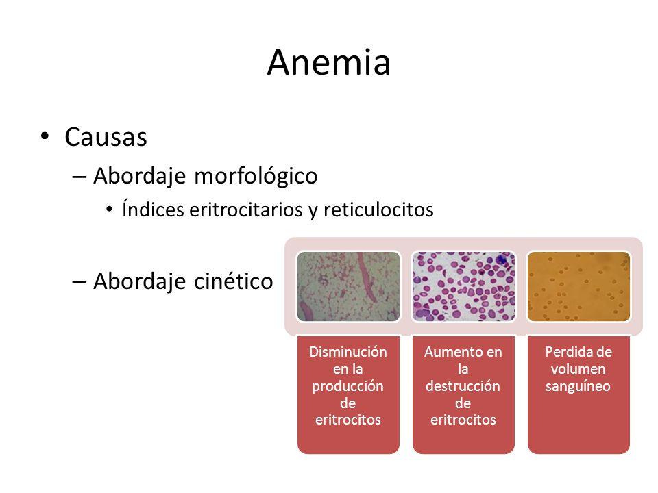Anemia Causas Abordaje morfológico Abordaje cinético