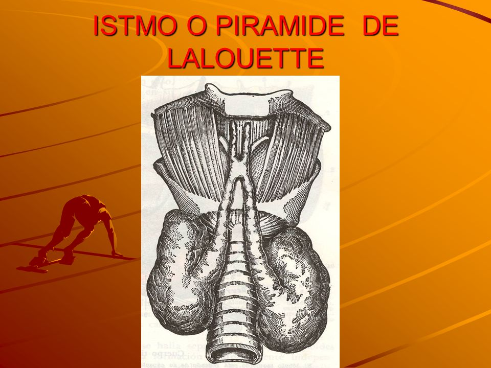 ISTMO O PIRAMIDE DE LALOUETTE
