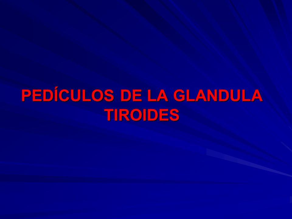 PEDÍCULOS DE LA GLANDULA TIROIDES