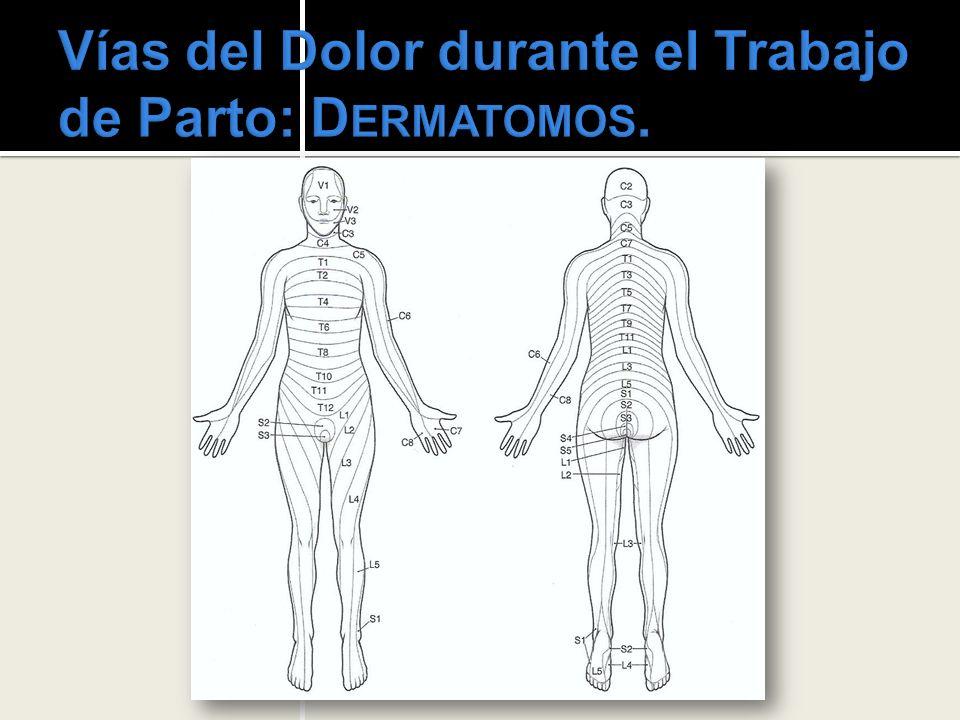 Vías del Dolor durante el Trabajo de Parto: Dermatomos.