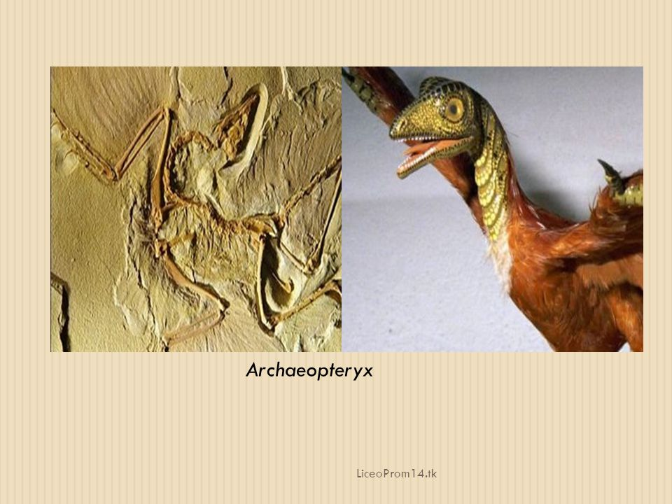 Archaeopteryx LiceoProm14.tk