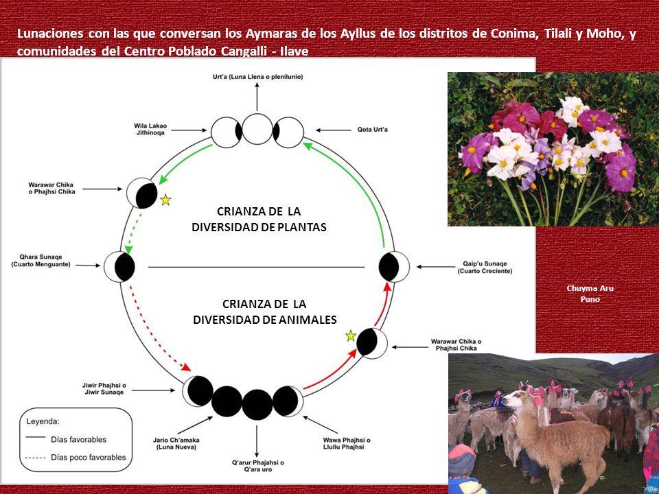 DIVERSIDAD DE ANIMALES