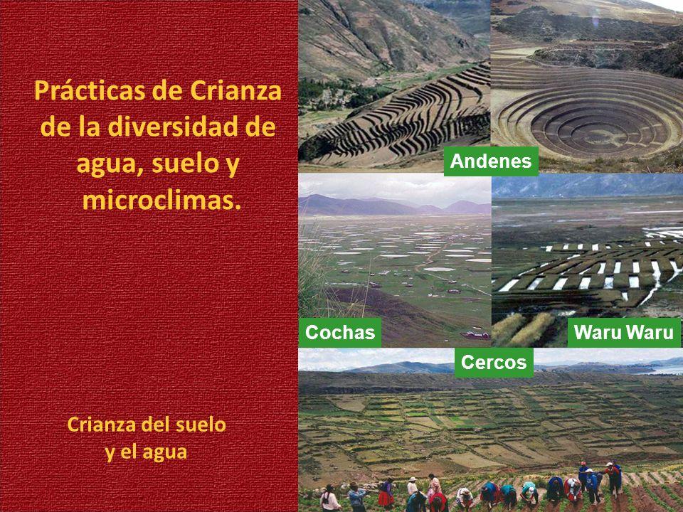 Prácticas de Crianza de la diversidad de agua, suelo y microclimas.