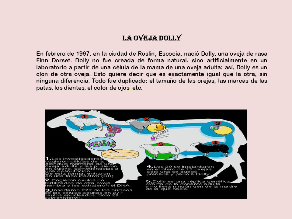 LA OVEJA DOLLY