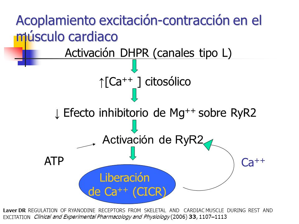 Acoplamiento excitación-contracción en el músculo cardiaco